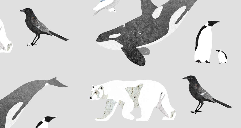 Vinterens dyr – personligt projekt