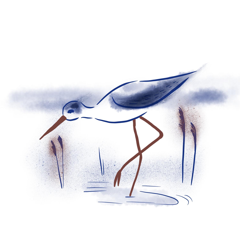 Vadefugl
